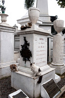 Cemetary cats 2